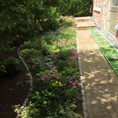 Mozak Lawn, Using Low Growing Spreading Plants Instead of Grass for Shading Damp Lawn Areas